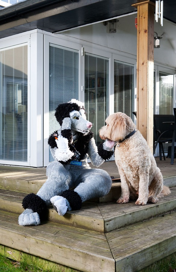 Edward Fuzzypaws and Teddy share a moment in their garden, Richmond, London