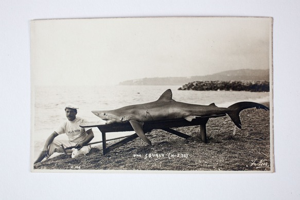 A fisherman with his catch (undated) The shark has been thoughtfully placed on a bench for posterity