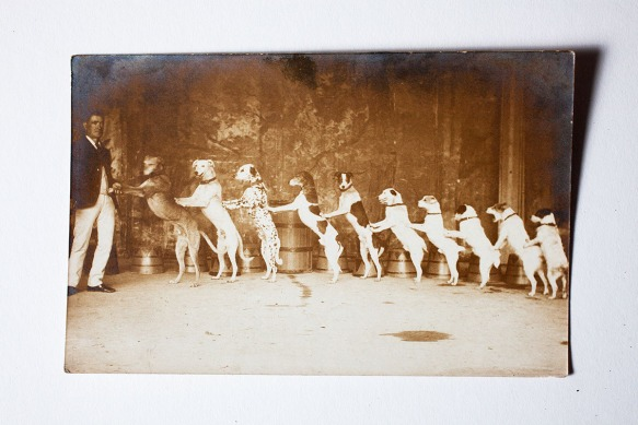 The truth is that Britain's Got Talent has always existed, the difference is that we retained a stuff upper lip and did not dare mention 10 dogs standing in a row, lest we be not afforded a cup of tea with milk. This postcard is of Astley's Circus, which is according to the V&A, Britain's first circus, starting in 1768. I would imagine this postcard is from the end of the 19th century